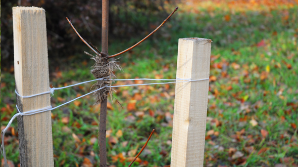 Tree support stakes used to strengthen the trunk and prevent wind damage