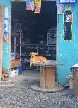 a dog's life in Olon