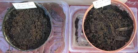 Lechugas y puerros en semilleros