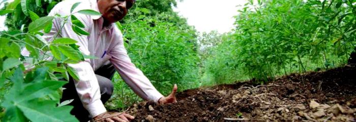 ¿Que es la agricultura orgánica?