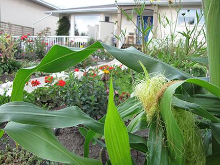 Beneficios de la agricultura urbana vs la agricultura tradicional