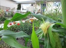 Beneficios de las granjas urbanas a la comunidad