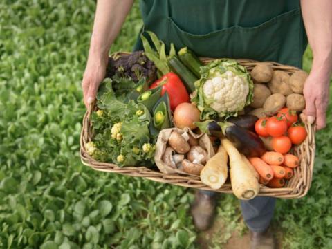 datos curiosos sobre la agricultura en estados unidos