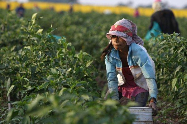 agricultura en mexico