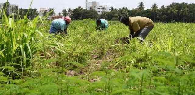 Beneficios y ventajas de la agricultura orgánica