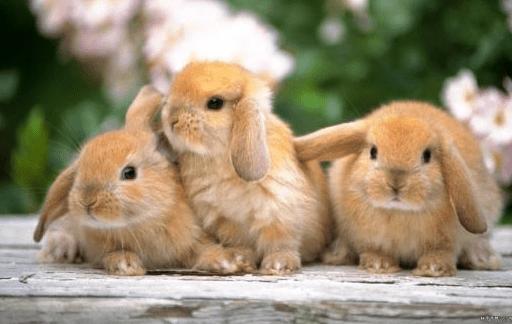 ¿Porque mi conejo esta temblando?