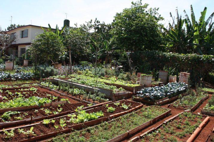 fotografia de agricultura urbana