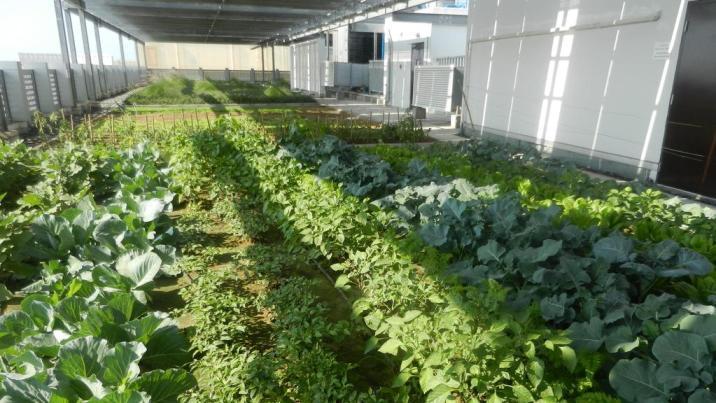 porque es buena la agricultura urbana