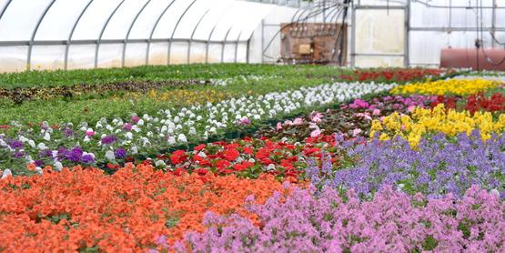 que es la horticultura y definiciones