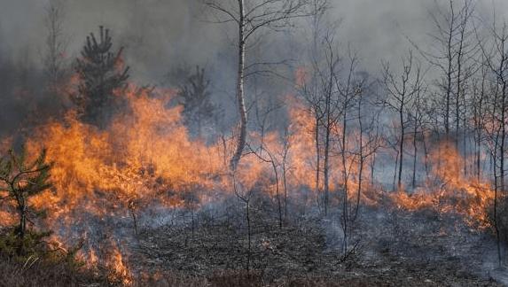 quemando bosques tala agricultura