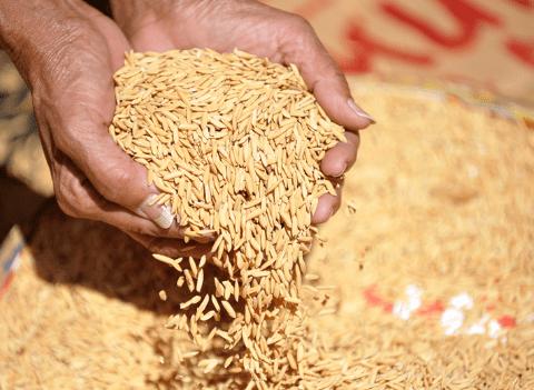 paises productores de arroz en el mundo