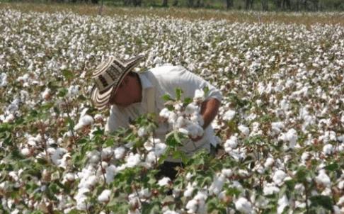 Principales países productores de algodón en el mundo