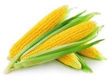 ¿Cual es el origen del maíz?