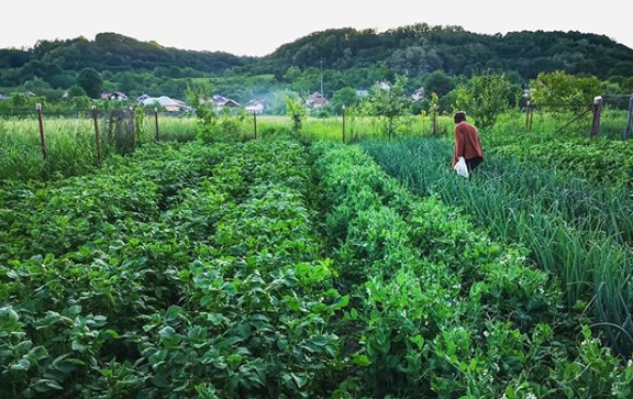 como construir un jardin comunitario