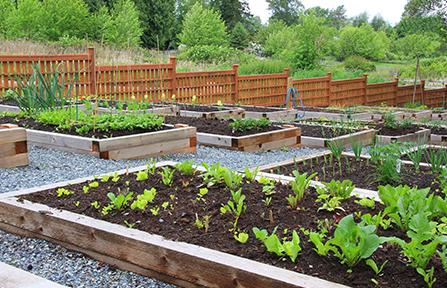 pasos para crear un jardín comunitario