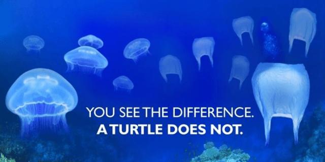 Bolsas y medusas