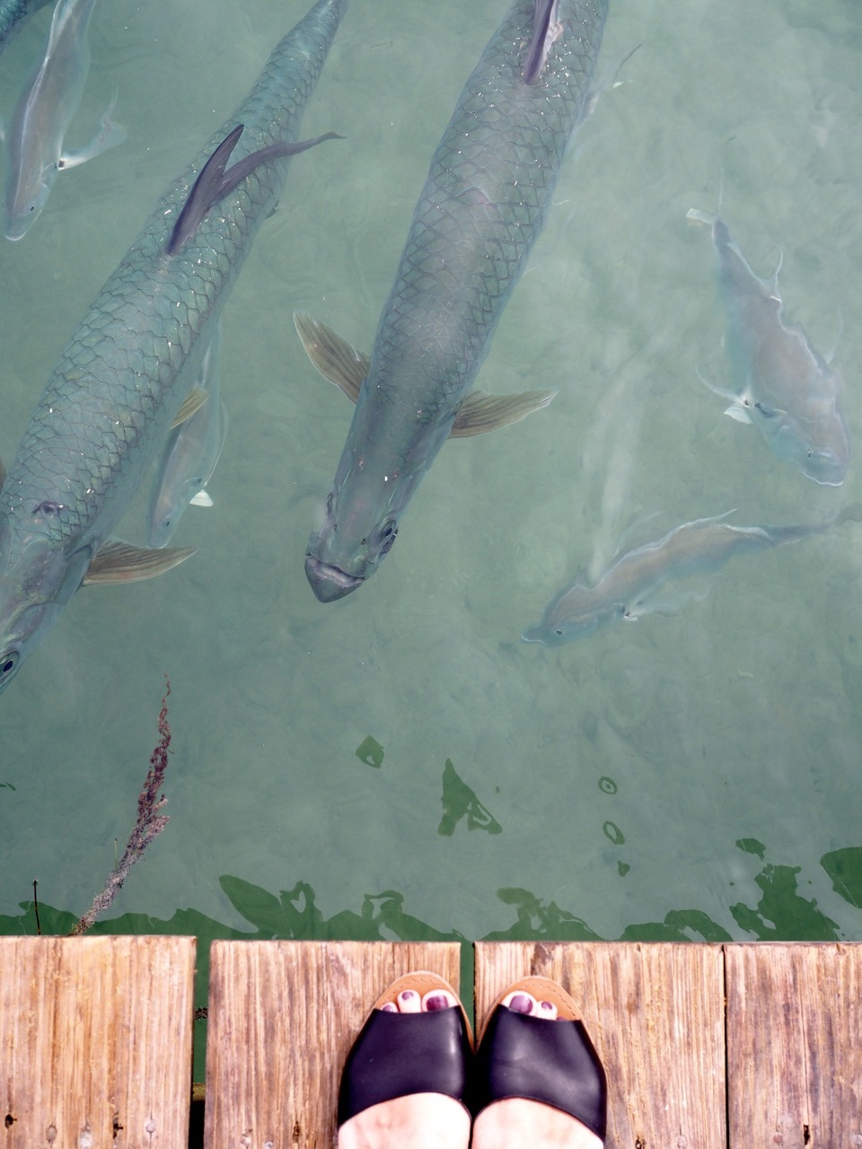 things to do in the florida keys - 1