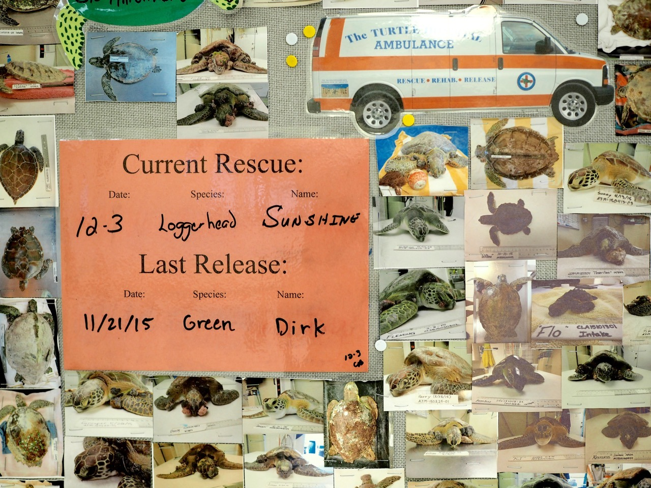 Turtle Hospital in The Florida Keys