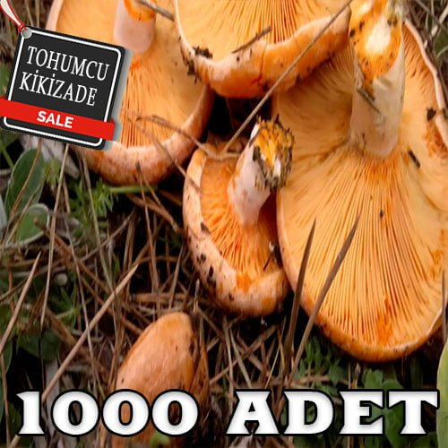 kanlıca 1000