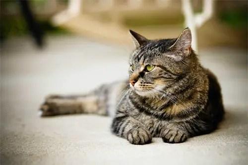 Quand toiletter son chat? A quelle fréquence?