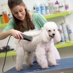 Quel est le programme de Formation de Toiletteur Canin ?