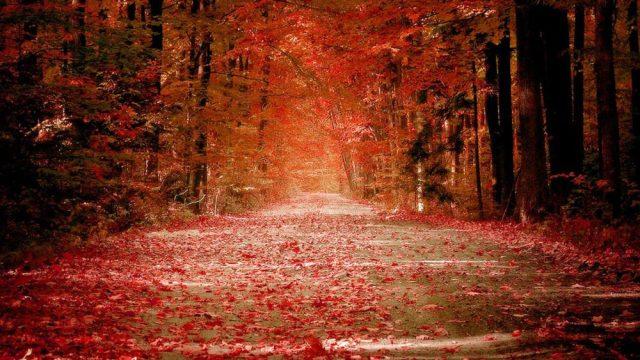 6937896-fall-nature-wallpaper