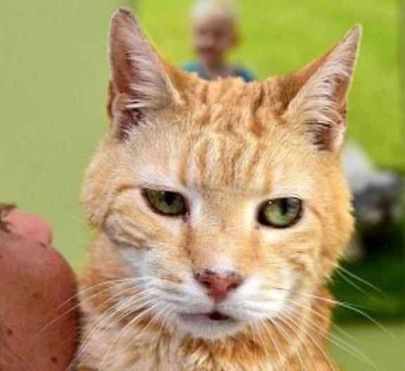 ο χώρος γνωριμιών για τις γάτες Ταχύτητα ραντεβού έρευνα ψυχολογία