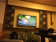 牧場で動物たちに会えなかったので、部屋で『世界ネコ歩き』を観て溜飲を下げる妻。