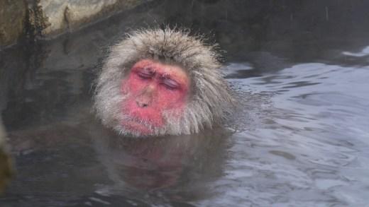 20141227 Japanese Snow Monkeys of Jigokudani