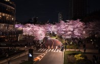 Midtown Cherry Blossoms illumination