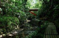 Todoroki Valley – Tokyo's small jungle