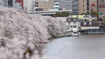 Iidabashi (The Sakura Guide)