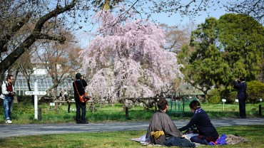 Koishikawa Botanical Gardens (The Sakura Guide)