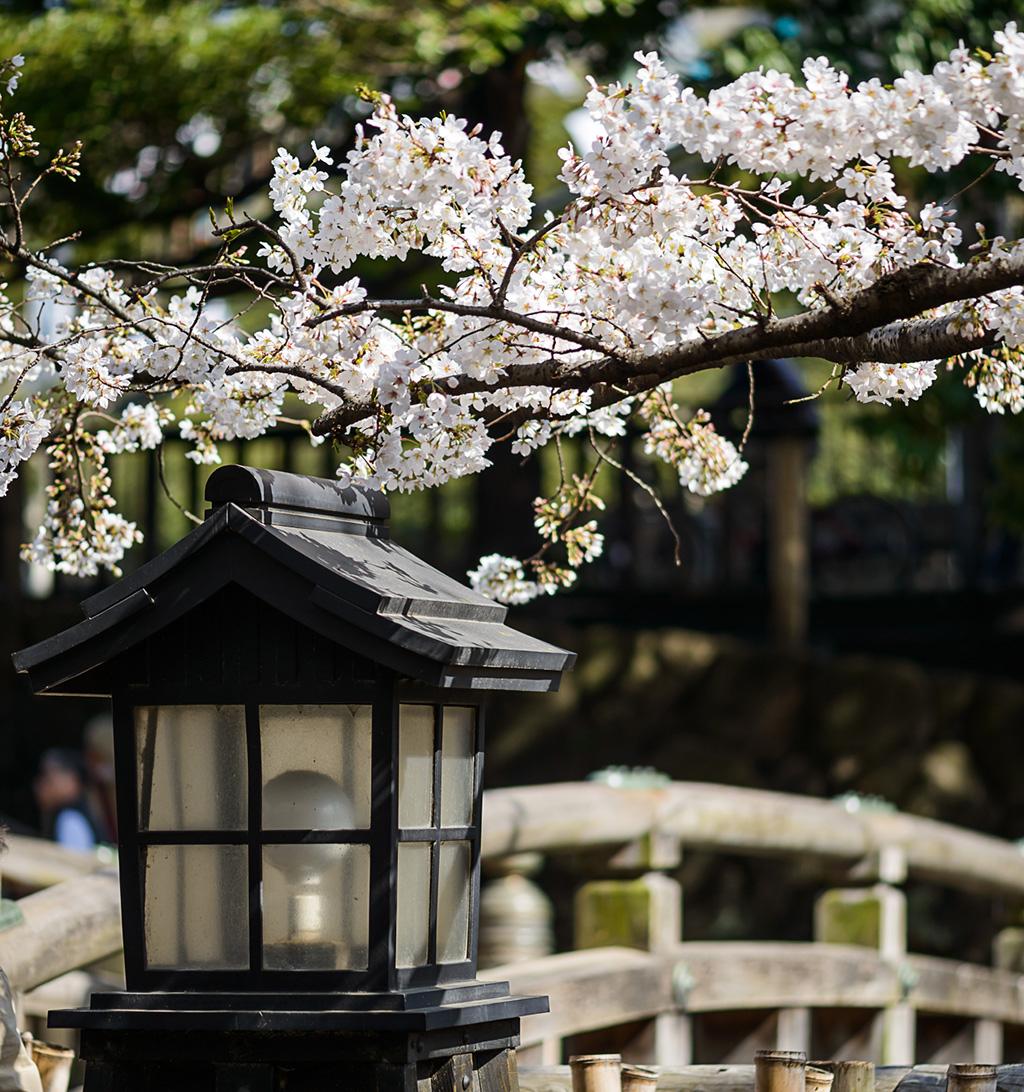 Zojo-ji Temple (The Sakura Guide)