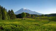 Obuchi Sasaba and Mt. Fuji