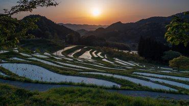 Oyama Rice Terraces