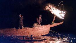 Ukai Cormorant Fishing
