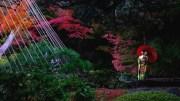 Morning stroll in Kyu Furukawa gardens