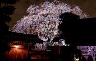 [Sado Island] Shokoji Temple