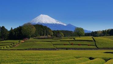 Obuchi Sasaba Green Tea Plantations