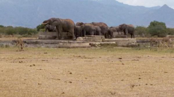 Elefanten in Toloha