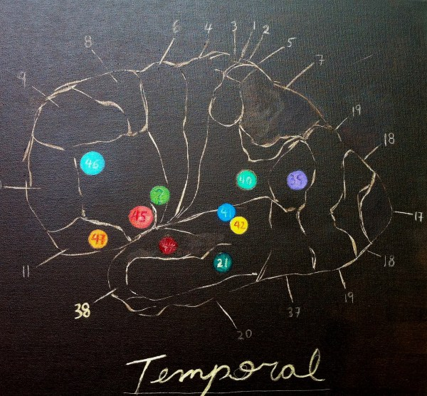 limbic temporal functional (closeup)