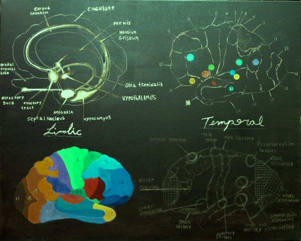 limbic temporal functional