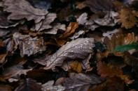 161118-haugh-woods-2