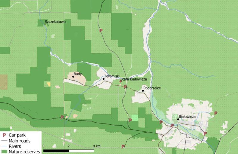 central Białowieża Forest