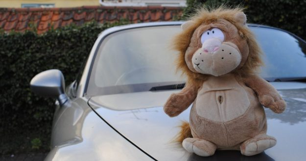 Vito Car-Lione
