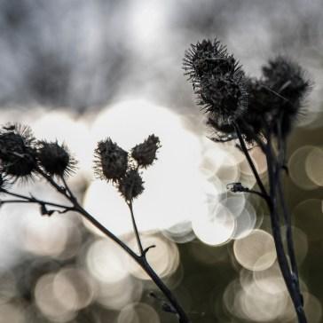 Lidt hygge billeder fra efteråret og vinter 2018. 3