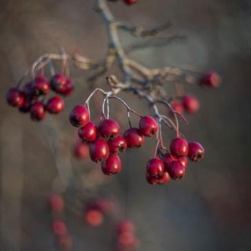 Lidt hygge billeder fra efteråret og vinter 2018. 7