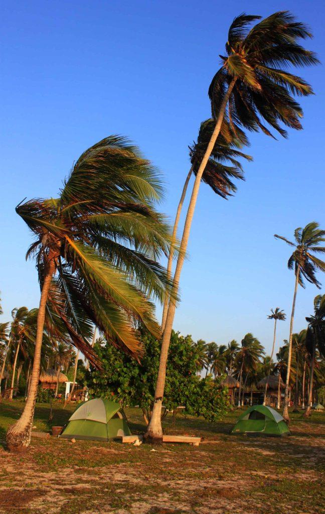 Isla Mucura - Palm tree