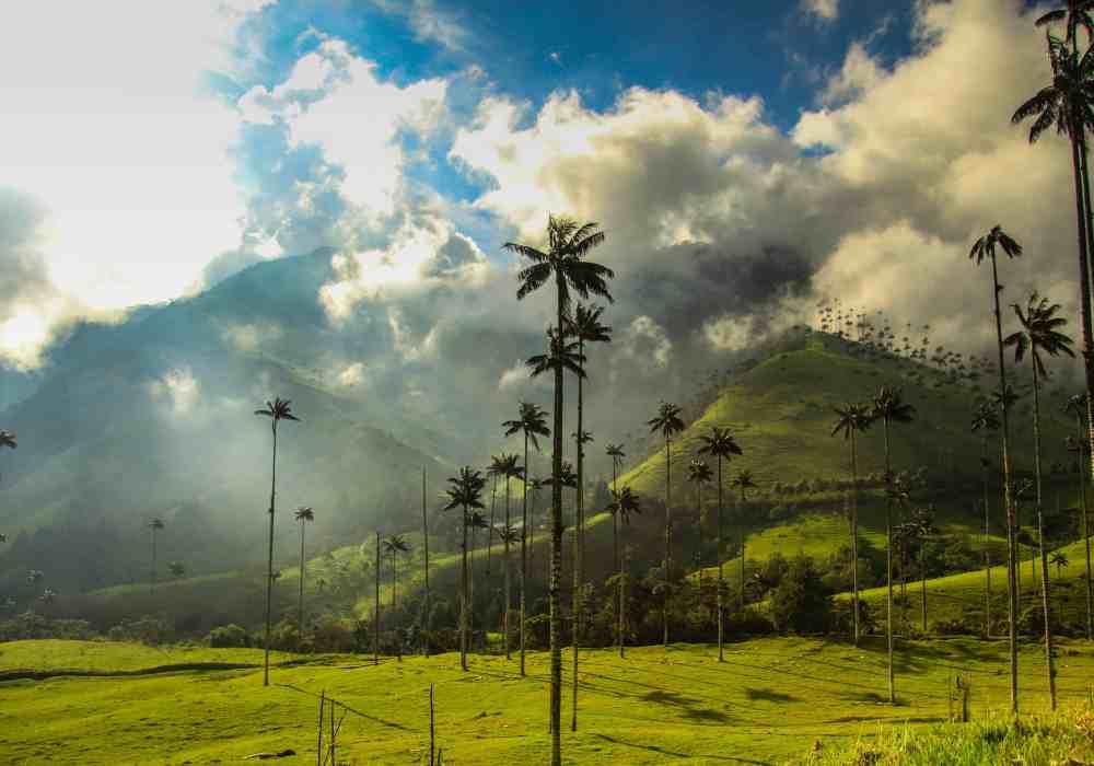 Valle de Cocora near Salento, Colombia